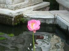 Lotus. Jl Raya Lungsiakan